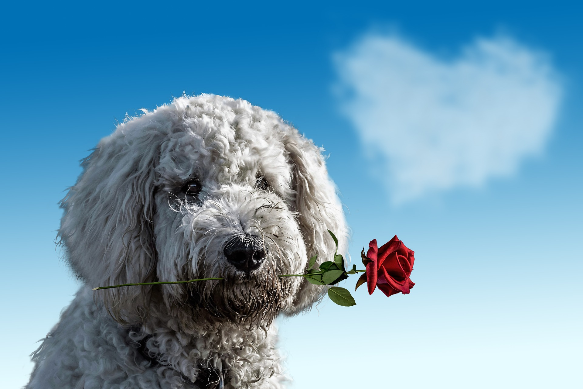 Valentine's Day Ads 2019: Lets see which ones are worth the love!